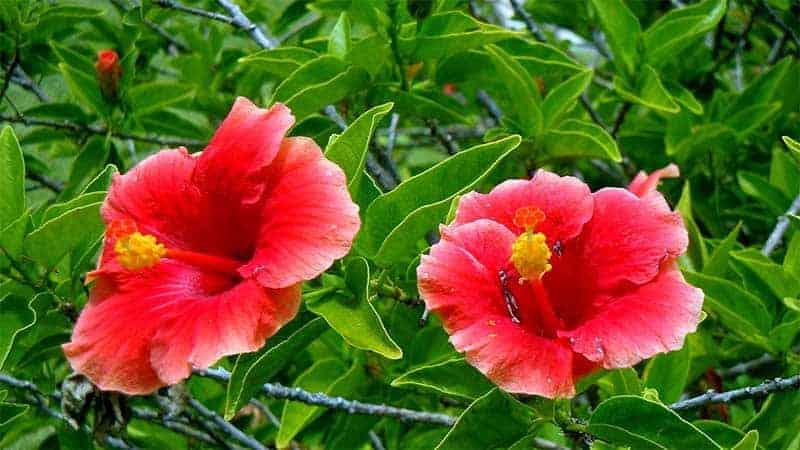 Flowers blooming in Bermuda