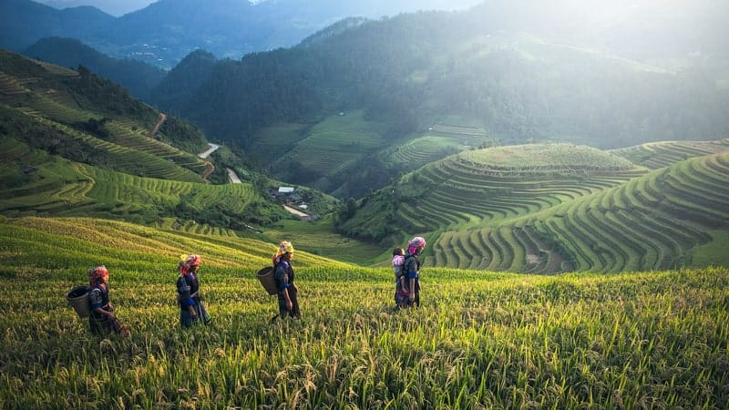 Fields in Bali, Indonesia - Oceania World Cruises