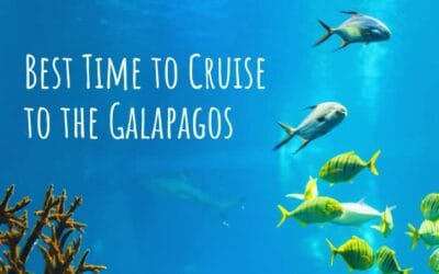 4 Best Times to Cruise to the Galapagos