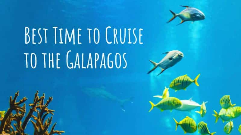 Best Time to Cruise to the Galapagos