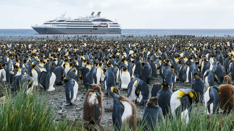 Penguin rookery in Antarctica with cruise ship in the background - Best Antarctica Cruise Lines