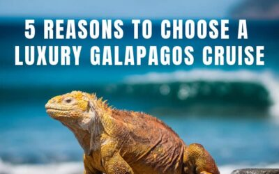 5 Reasons to Choose a Luxury Galapagos Cruise