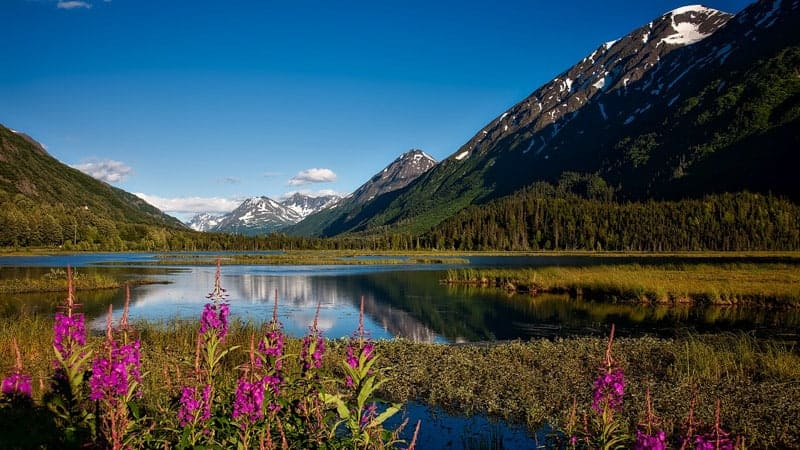 Chugach National Forest near Valdez, Alaska
