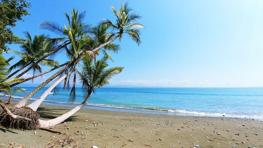 Beach with palm trees in Costa Rica