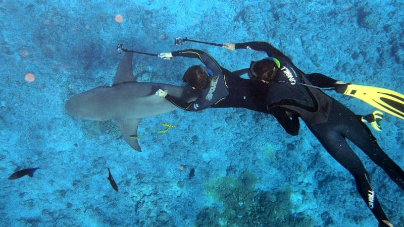 Snorkling with Sharks in Bora Bora