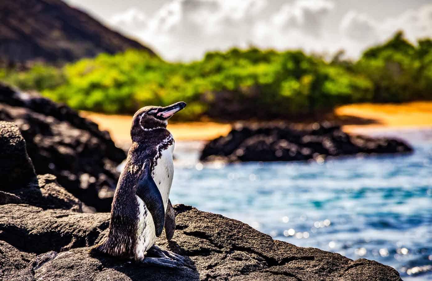 Penguin sunbathing on rocks near the ocean.
