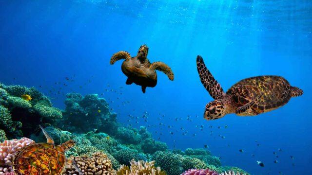 Celebrity Cruises:  Galapagos