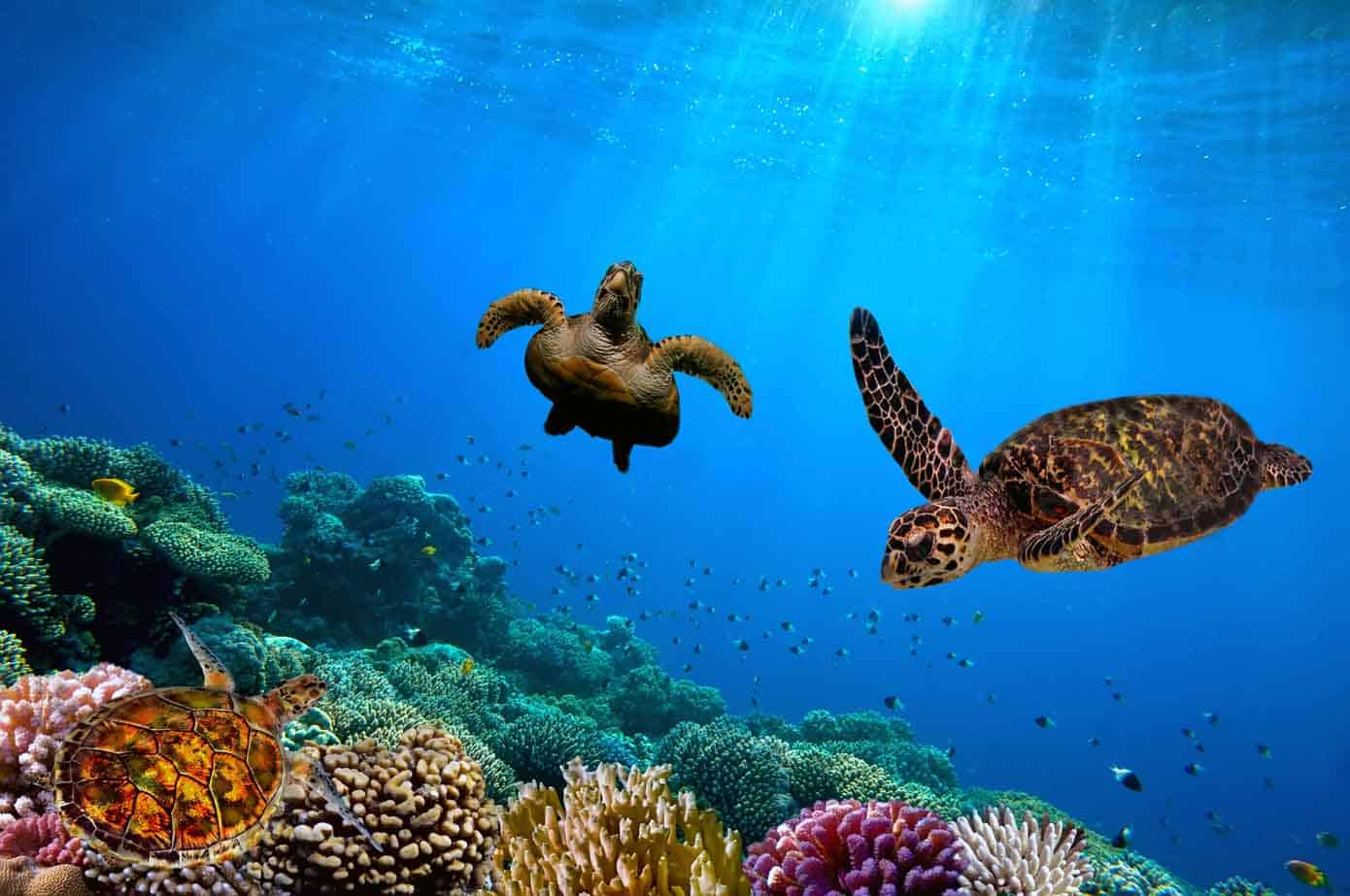 Turtles swimming underwater near a reef.