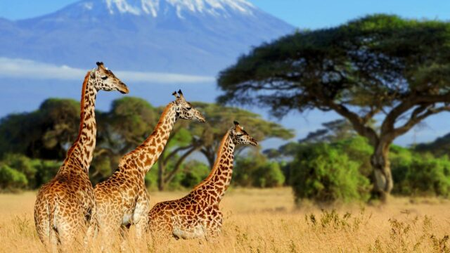 Crystal Cruises to Africa