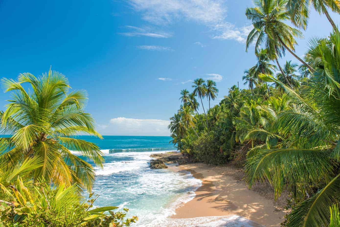 Palm tree lined tropical beach with sparkling water on a sunny day.